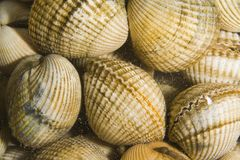 Cockles Royalty Free Stock Photo