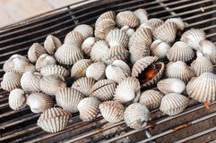 Cockles. Grill on sieve Stock Photography