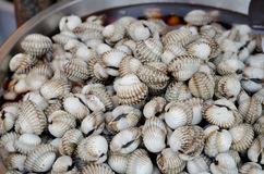 Cockles. Full  fresh cockles for sale at a market Stock Photography