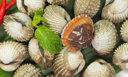 Cockles Stock Image