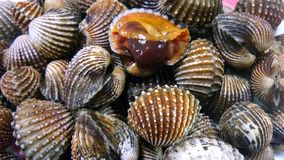 Cockles Stock Images