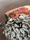 Cockles on a bouy. At the seaside with lots of Royalty Free Stock Image