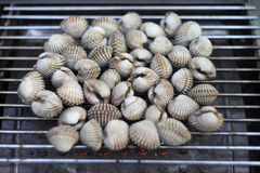 Cockles on flaming grill Stock Image