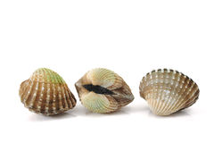 Cockles Royalty Free Stock Photos