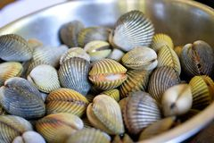 Cockles. Heap of Cockles in bowl, selective focus royalty free stock photography