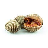 Cockles isolated on white background Royalty Free Stock Photography