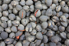 Cockles on the market seafood Stock Photography