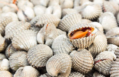 Cockles open the mouth Royalty Free Stock Photo