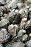 Cockles raw seafood ready for cooking closeup. Cockles raw seafood ready for cooking closeup Royalty Free Stock Photo