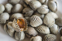 Cockles scalding Stock Images