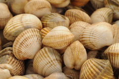 Cockles on the Trouville market Royalty Free Stock Images