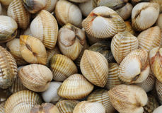Cockles on the Trouville market Royalty Free Stock Image