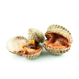 Cockles  on white background Royalty Free Stock Images