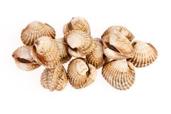 Cockles on white Royalty Free Stock Images