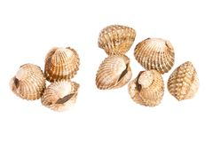 Cockles on white Stock Photo