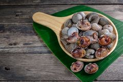 Cockles in a wooden dish. There is a banana leaf below Stock Image