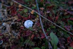 Cockleshell auf Gras stockfoto