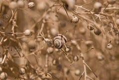 Cockleshell av en snail royaltyfria foton