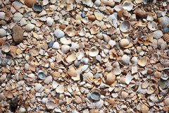 Cockleshell beach surface. Background beach Royalty Free Stock Image