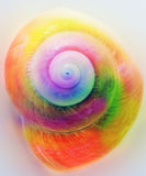 Cockleshell. Colorful twist cockleshell of close up Stock Photos