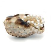 Cockleshell con le perle bianche Fotografie Stock Libere da Diritti