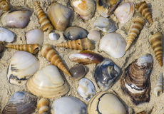 cockleshell different on sea sand Stock Images