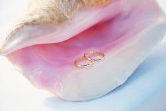 Cockleshell grande Anéis no escudo imagens de stock royalty free