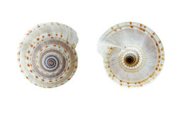 Cockleshell isolated on white background clipping paths Stock Photography
