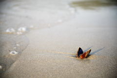 Cockleshell na piasku Zdjęcie Royalty Free