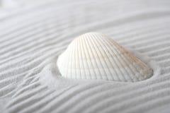 Cockleshell op overzees zand royalty-vrije stock afbeeldingen
