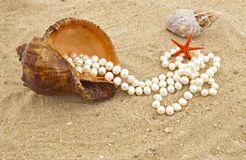 Cockleshell with a pearl necklace. On seacoast Stock Images
