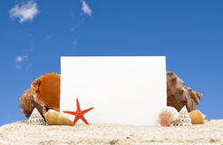 Cockleshell with a pearl necklace on sand Royalty Free Stock Image
