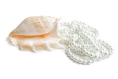 Cockleshell with pearls Stock Images