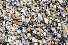 Cockleshell plaży powierzchnia Obrazy Royalty Free