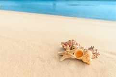 Cockleshell on sand on a background a sea Royalty Free Stock Photo