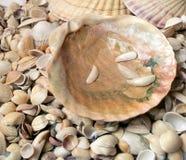 Cockleshells моря Стоковые Фото