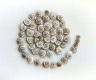 Cockleshells на светлой штейновой предпосылке как спираль стоковое изображение rf