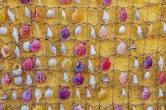 Cockleshells от моря связали к малой веревочке Стоковое Изображение RF