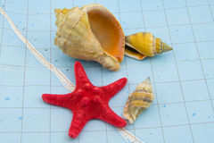 Cockleshells Stock Image
