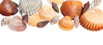 Cockleshells Royalty Free Stock Photos