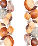 Cockleshells Stock Photography