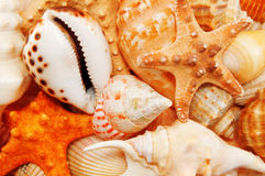 Free Cockleshells Royalty Free Stock Images - 5858269