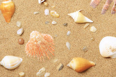 Free Cockleshells And A Starfish Lie On Seacoast Stock Image - 11572351