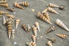 Cockleshells auf Sand Lizenzfreie Stockfotografie