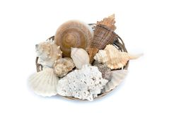 Cockleshells in a basket Royalty Free Stock Images
