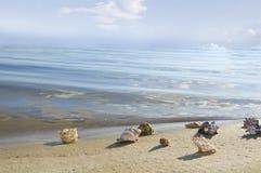 Cockleshells lie ashore sea Royalty Free Stock Photos