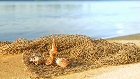 Cockleshells lie on a fishing net Stock Image