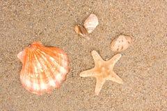 Cockleshells On Sea Sand Royalty Free Stock Photos