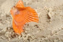 Cockleshells and sand Stock Image