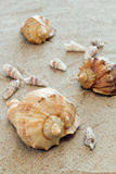 Cockleshells on sand. Composition of sea cockleshells on sand Stock Photo